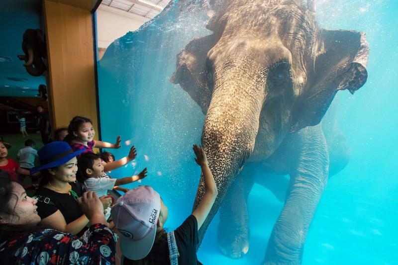 Фото слона в зоопарке Као Кео (Паттайя)