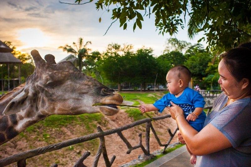 Фото жирафа в зоопарке Кхао Кхео