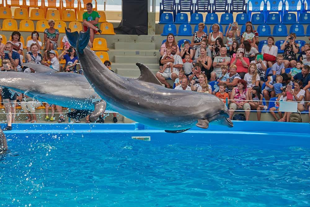 Новый Дельфинарий в Паттайе