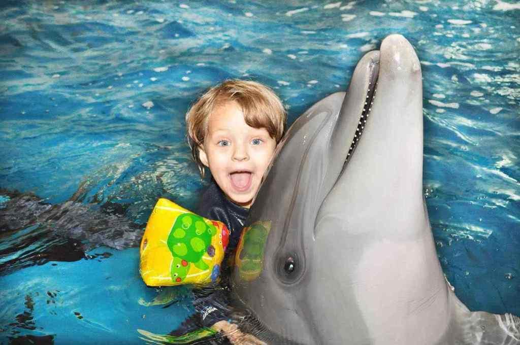 Фото из дельфинария