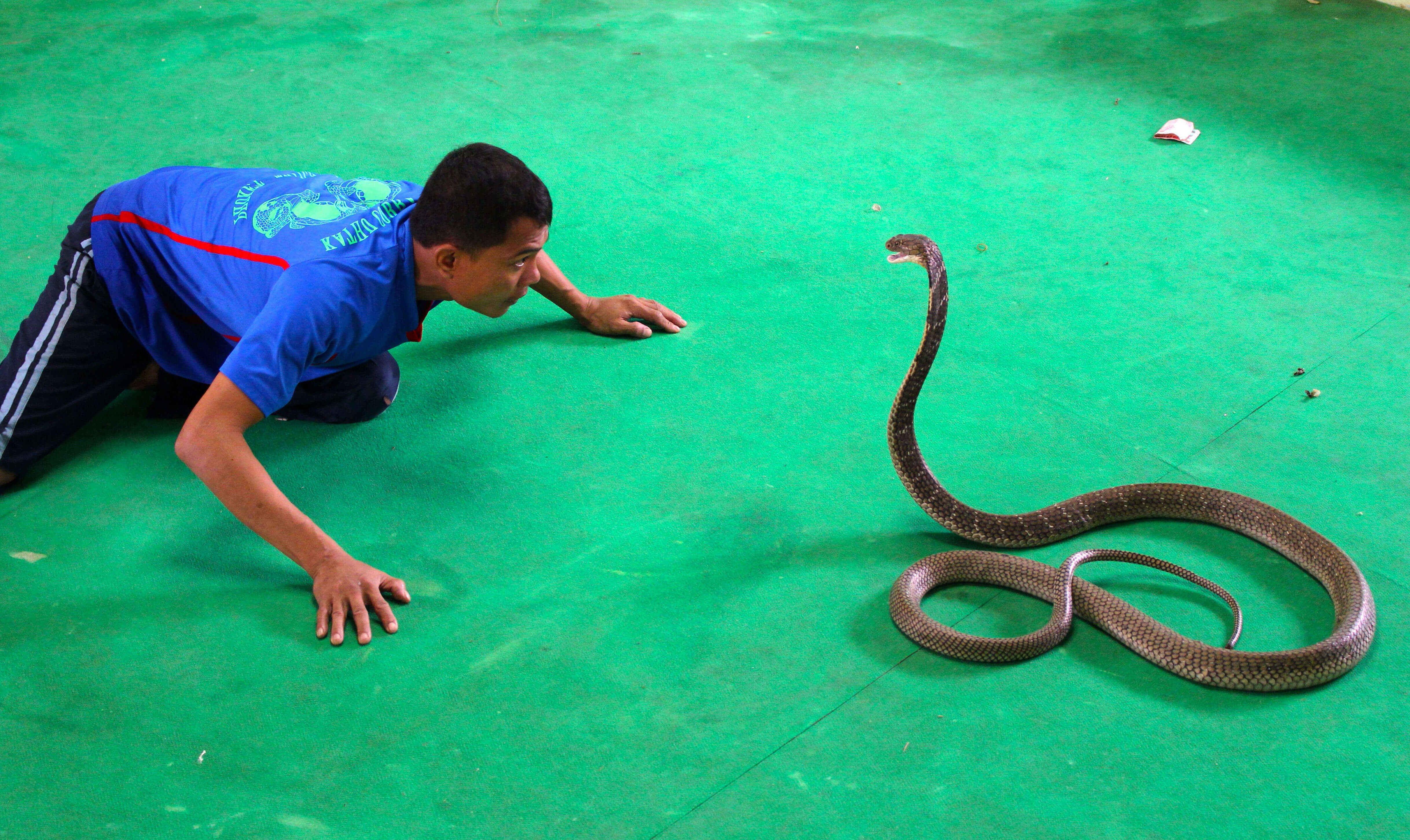 Змеиное шоу на острове Ко Чанг, Таиланд