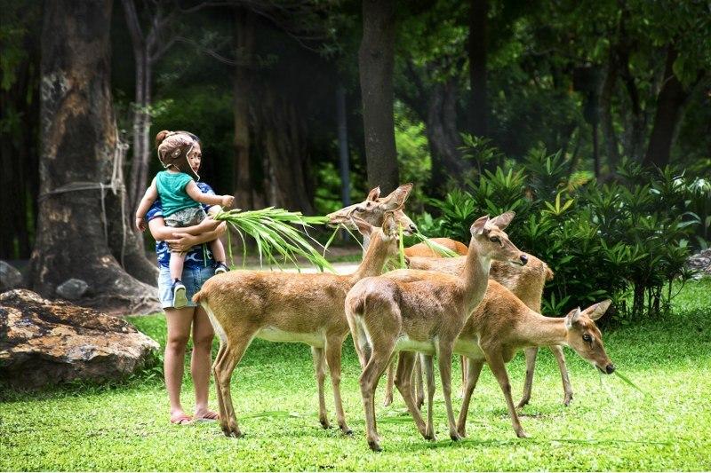 Фото зоопарка Као Кео в Паттайе