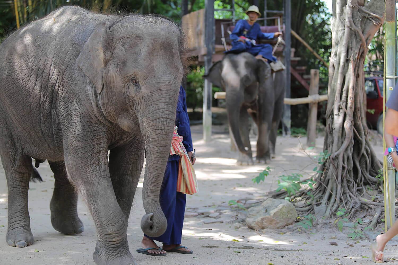 foto-derevni-slonov-v-pattaje (2)
