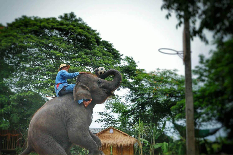 Фото деревни слонов в Паттайе