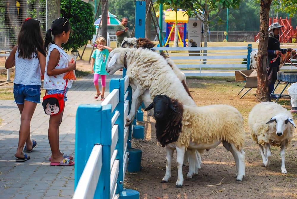 Фото овечьей фермы Грета в Паттайе