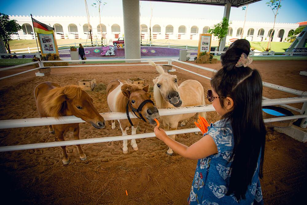 Фото парка Pipo Pony Club в Паттайе