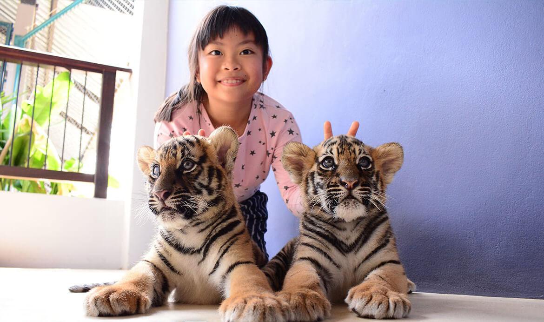 Фото тигриного парка в Паттайе